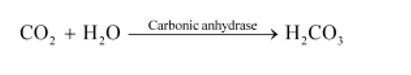 NCERT Solutions for Class 11 Biology chapter 17 Breathing and Exchange of Gases PDF Image 2