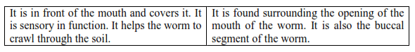 NCERT Solutions for Class 11 Biology chapter 7 Structural Organization in Animals PDF Image 4