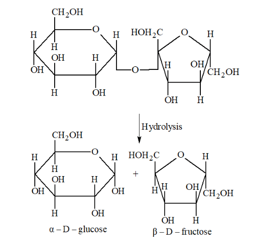 NCERT Solutions for Class 12 Chemistry Chapter 14 Biomolecules PDF Image 10