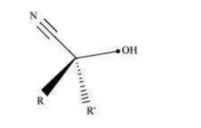 NCERT Solutions for Class 12 Chemistry Chapter 12 Aldehydes Ketones and Carboxylic Acids PDF Image 1