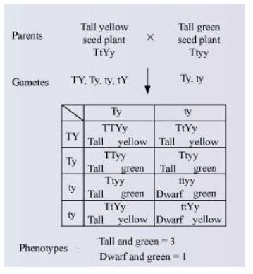 NCERT Solutions for Class 12 Biology Chapter 5 Principles of Inheritance and Variation PDF Image 9
